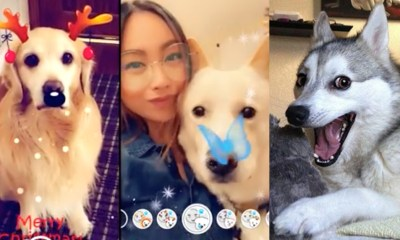 Snapchat lanza filtros PARA perritos
