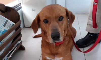 Regresan A Perro Adoptado Por Robar Comida De La Mesa, Perros, Perros Adoptados, Robar Comida Mesa, Perritos, Perros En Adopción