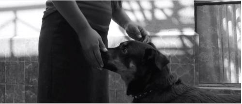 Esta es la historia detrás de El Borras el perrito en Roma