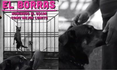 Exigen Nominación Para El Borras Perrito De Roma, Perro De Roma, El Borras, Nominaciones Oscar, El Borras, Roma