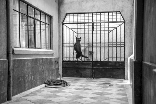 Piden Nominar al Borras, el perro de Roma en el Oscar