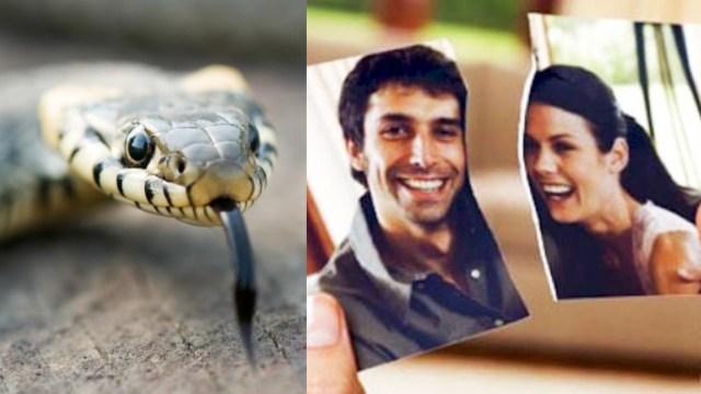 Zoológico deja nombrar serpientes como a tus exnovios