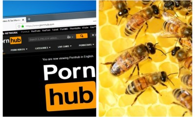 PornHub dona dinero para que no se extingan las abejas