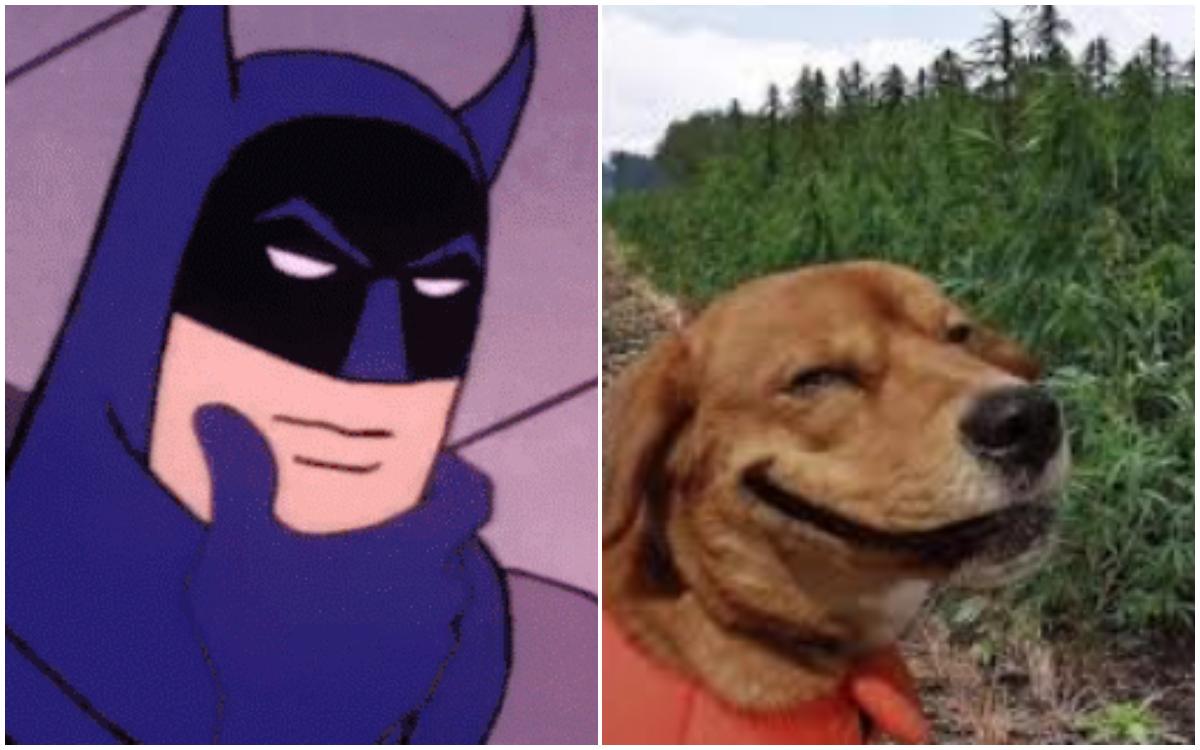 Perro da positivo en drogas tras paseo en el parque