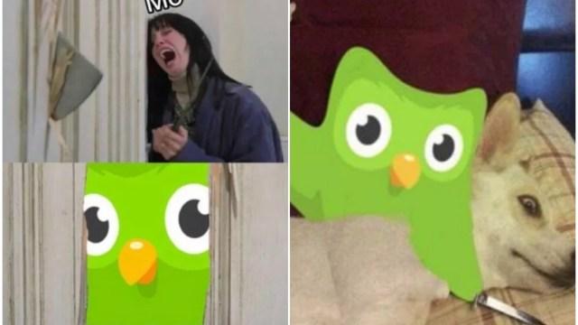 Los memes de Duolingo que te obligarán a aprender