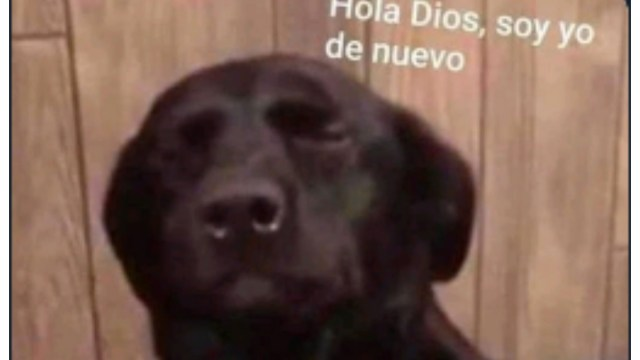 """Los mejores memes de """"hola dios, soy yo de nuevo"""""""