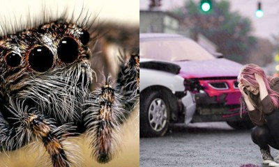 Aracnofóbica ve una araña y estrella su auto contra un árbol
