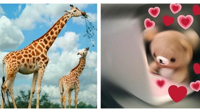 Nombres para la nueva jirafa de la CDMX