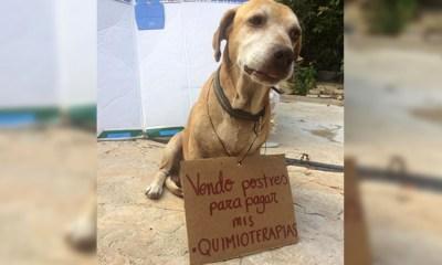 Perrito Vende Postres Para Pagar Qumioterapias, Quimioterapias Para Perro, Perros, Perrito Vende Postres, Quimioterapias, Campeche