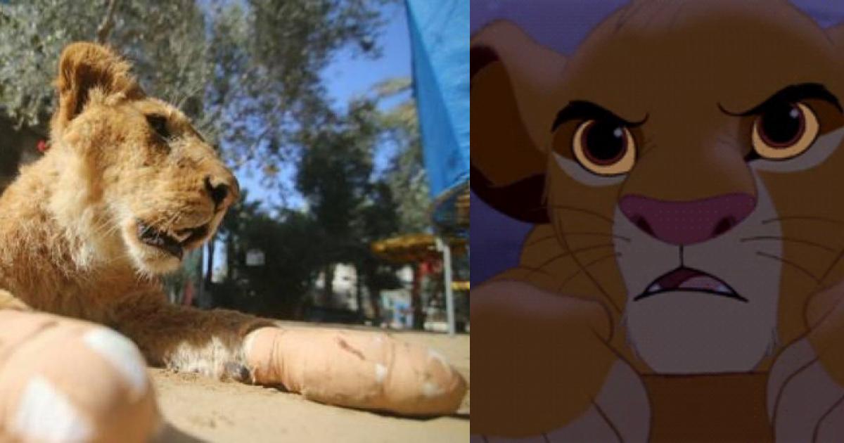 Le Quitan Garras A Cachorro De León, Quitan Las Garras A León, Mutilan A León En Zoológico, Mutilan, León, Zoológico