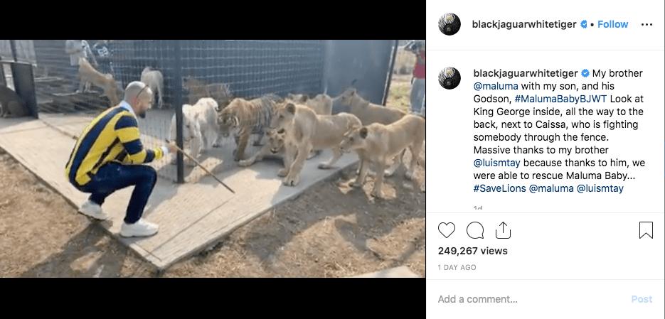 Maluma cierra su Instagram tras acusaciones de tráfico de animales