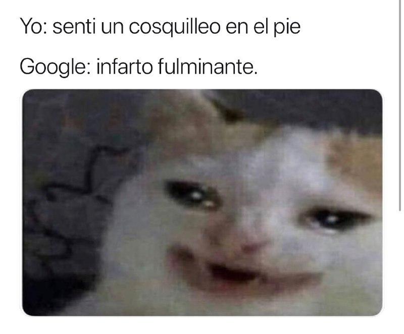 Los Memes Del Gato Llorando Google Y Su Origen Erizos