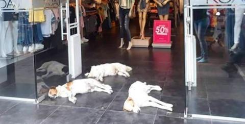 Tienda de ropa refugia perros del calor en Colombia