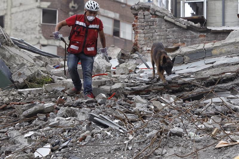 Chichi, perro rescatista del 19S necesita ayuda para pagar operación