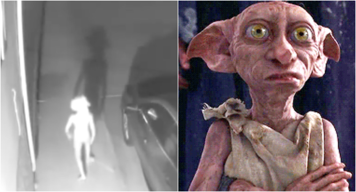 Video de extraña criatura igual a Dobby de Harry Potter