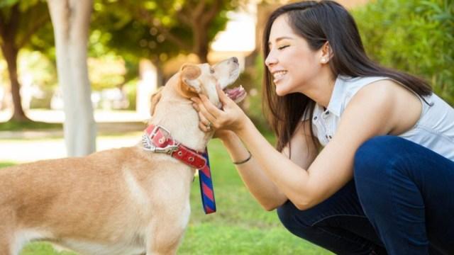 OMG! Hablar con tus mascotas es un signo de inteligencia