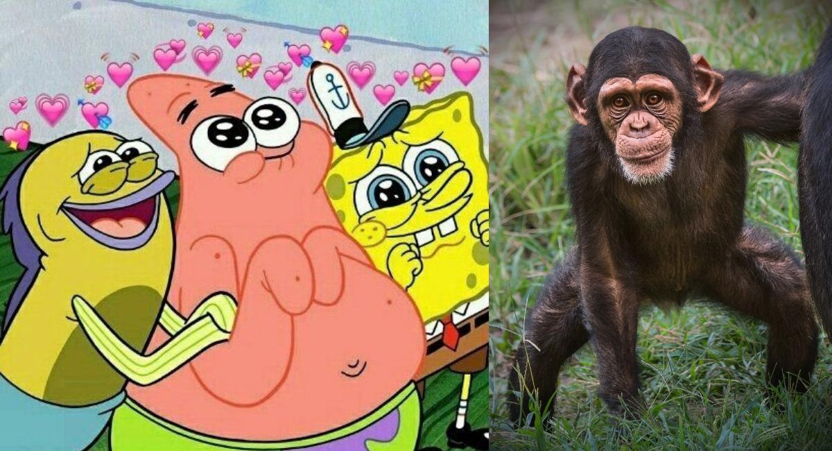 Chimpancés abrazan amigo rescatado de los cazadores