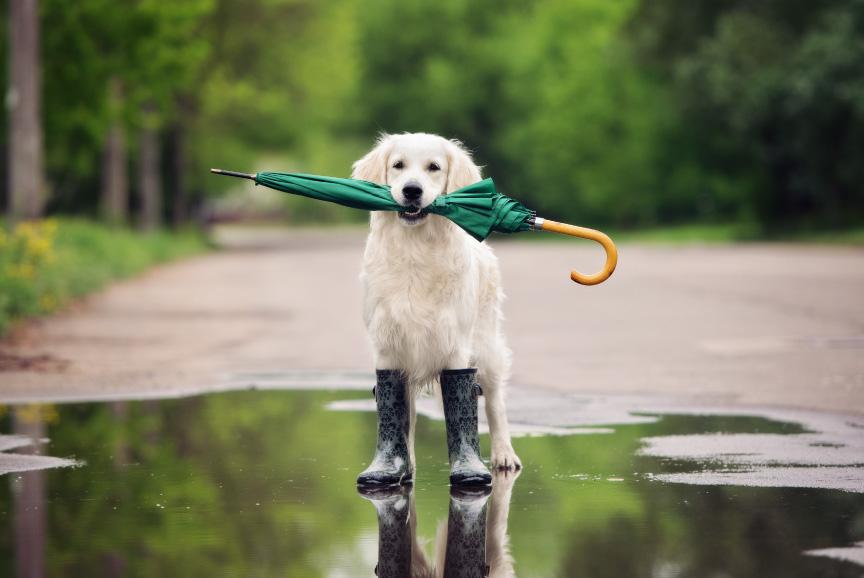Elo Mito: recuento de videos y fotos chistosos de perros