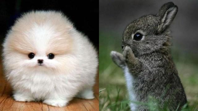 fotos-animales-tiernos-miercoles-animalitosbebé