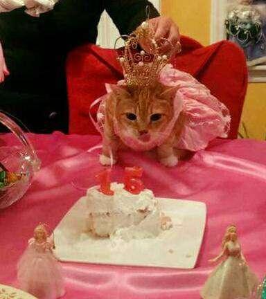 Gato tiene una fiesta de quinceañera por su cumpleaños XV