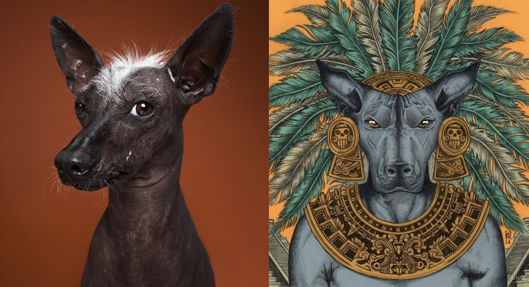 Origen del Xoloitzcuintle, el perro místico mexicano