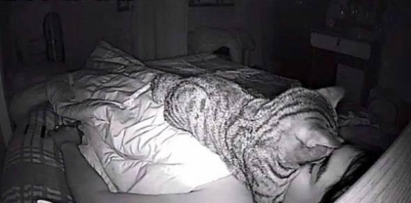 Gato trata de asfixiarlo mientras duerme 3. (Facebook Lomphonten Lomphontan)