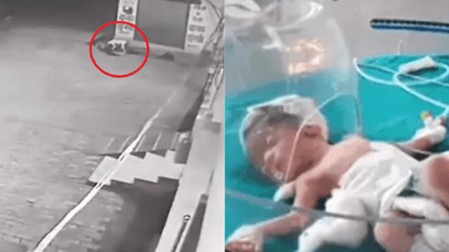 VIDEO: perros rescatan bebé abandonada en coladera callejera