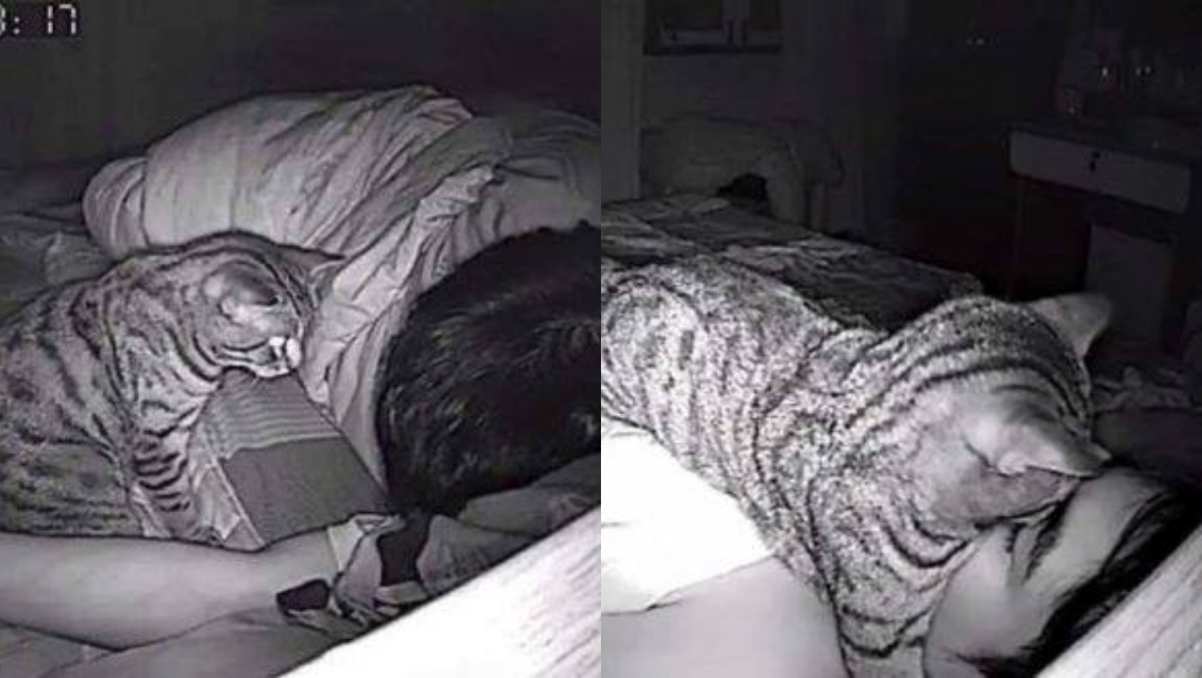 Foto: Gato trata de asfixiarlo mientras duerme. 28 de julio 2019