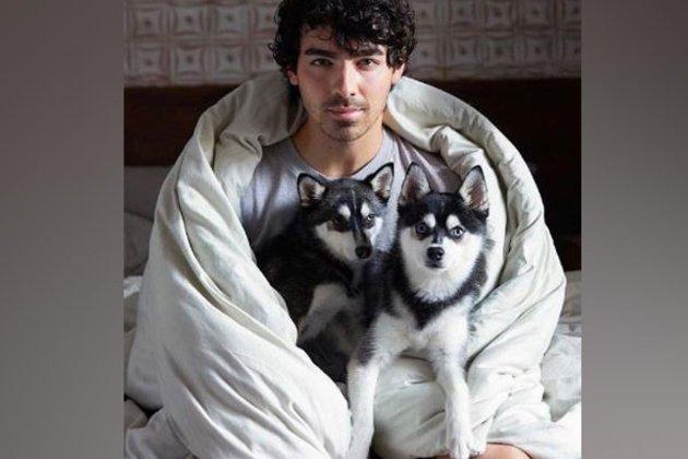 Muere atropella el perro de Joe Jonas y Sophie Turner