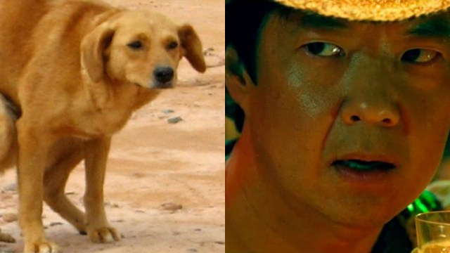 Perro Haciendo Popó, Perros, Por Qué Mi Perro Me Mira Fijamente, Comportamiento Perros, Popó, Caca