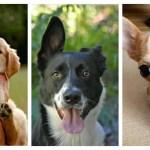 Fotos de perros tiernos para olvidar la desgracia del mundo