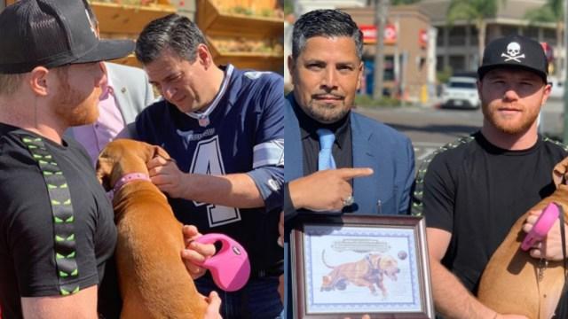 Saúl Canelo Álvarez, Canelo Álvarez, Canelo, Perro, Pit Bull Terrier, Chico López Criador De Perros