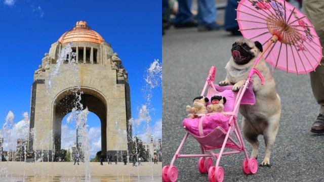 Reunión Masiva De Pugs, Cuarta Reunión Masiva De Pugs, Quinta Reunión Masiva De Pugs, CDMX, Ciudad De México, Reunión De Perros Pug