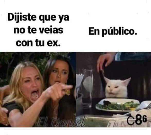 Meme gato en la mesa