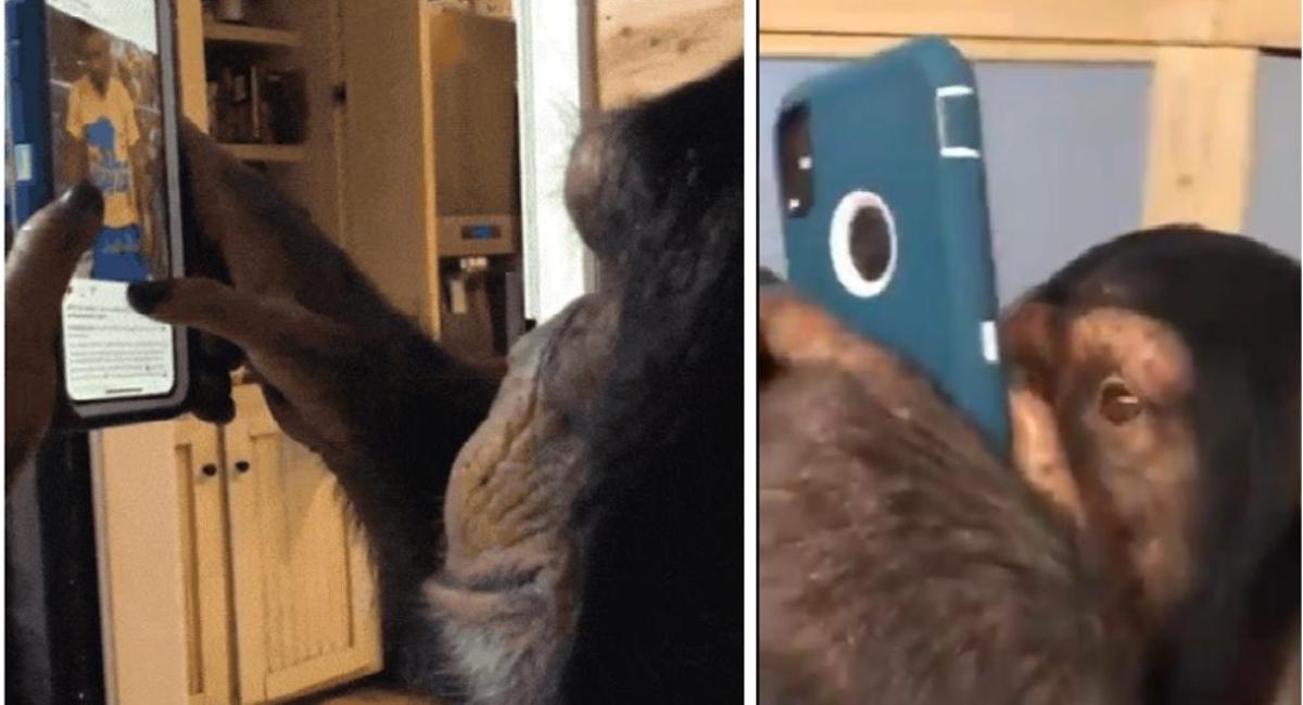 Mono usa Instagram como si fuera un usuario humano