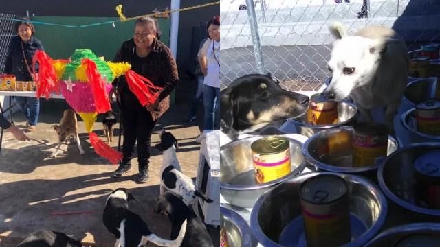 Organizan posada en refugio para perros en Tamaulipas