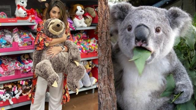 Actriz confunde a koala con perezoso al hablar de Australia