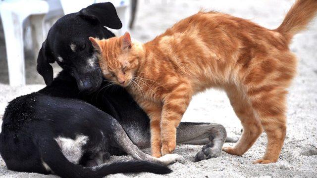 Proponen cárcel para quien abandone a perros y gatos