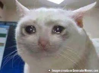 meme gato llorando