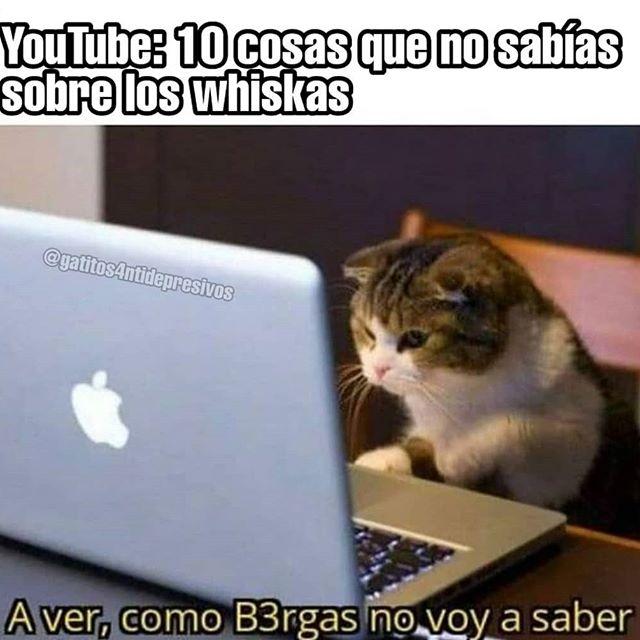Whiskas alimento malo para los gatos