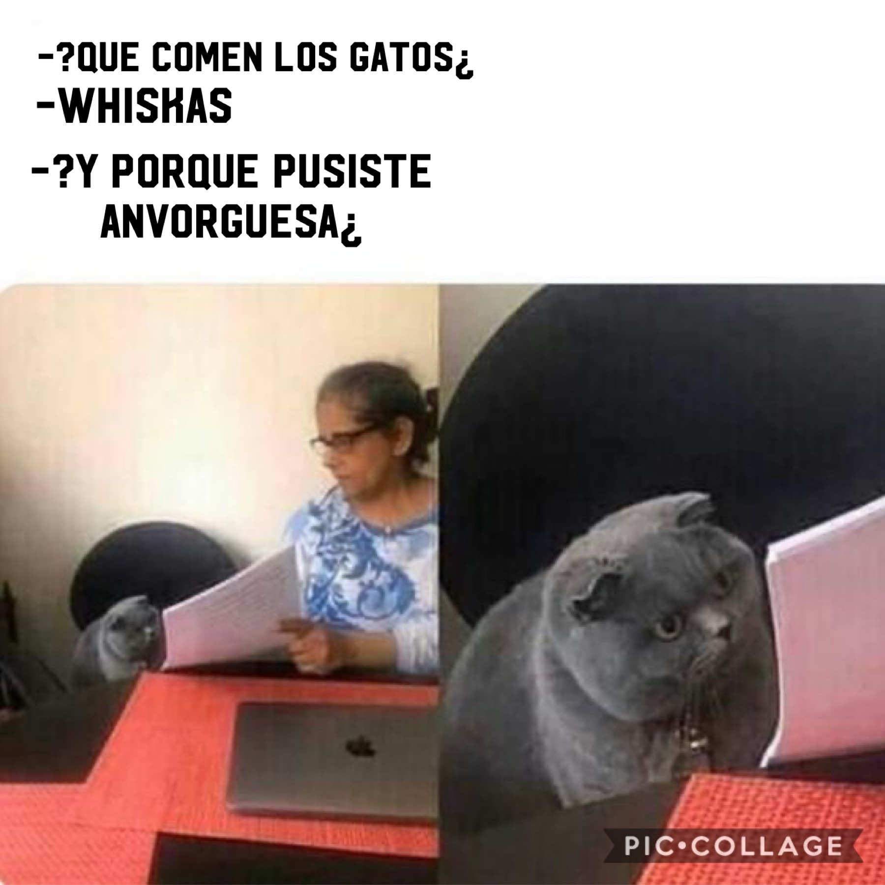meme gato en el examen