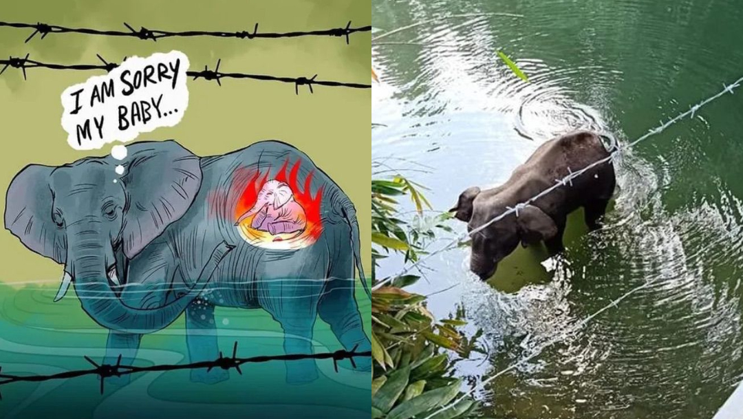 Elefanta embarazada muere tras comer piña con explosivos