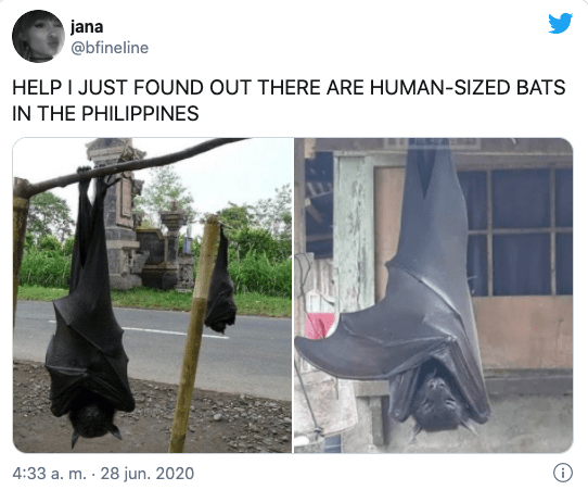 Murciélago tamaño humano