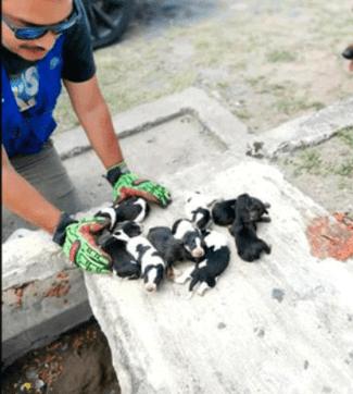 Rescatan a 9 perritos bebé y a su mamá de una alcantarilla