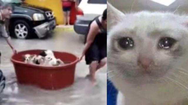 Abuelitos pierden casa huracán Hanna salvan perritos: Video