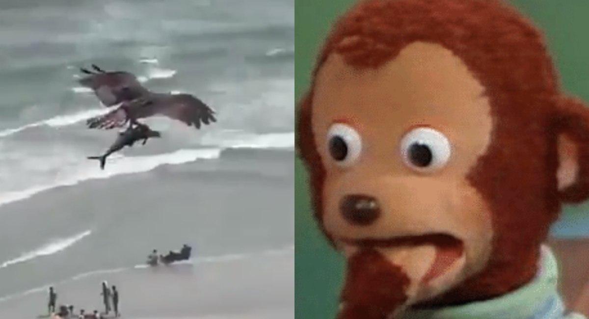 Aguila debora a tiburón en video