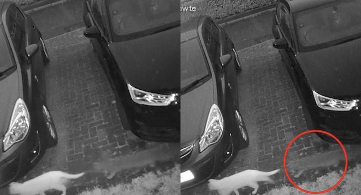 Video: Captan a gato fantasma persiguiendo a otro gatito