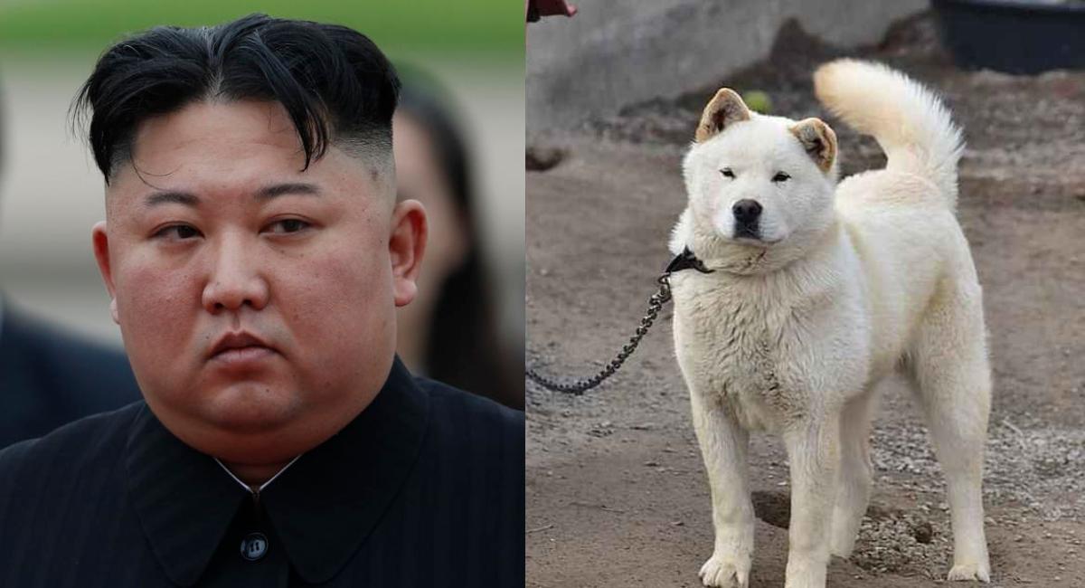 Kim Jong-un prohibe tener perros en Corea del Norte