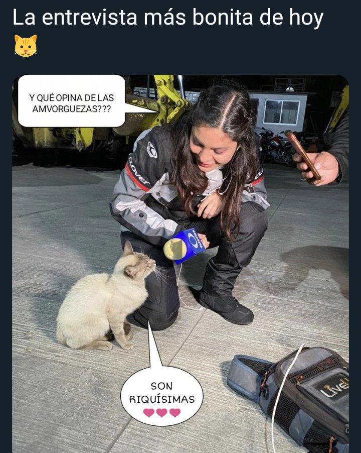 Reportera entrevista a un gato de la calle se hace viral