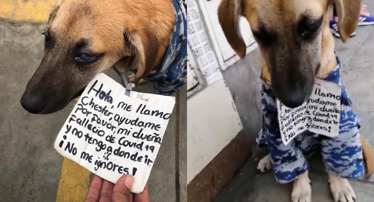 Perro busca casa luego de que su dueña murió por Covid